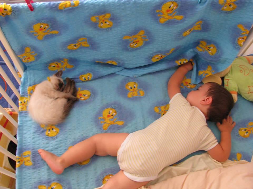 Despre somn și cosleeping – variații pe aceeași temă